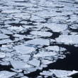 Weddell Sea, ice floe — Stock Photo