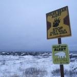 Polar Bear information sign — Stock Photo #33889079
