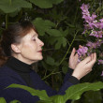 Woman Examining Flowers — Stock Photo #33889269