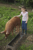Girl Petting a Pig — Stock Photo