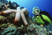 Scuba diver beside large starfish — Stock Photo