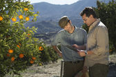 Farmer and man reading in orchard — Stock Photo