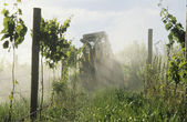 Tractor spraying vineyard with fungicide — Stok fotoğraf