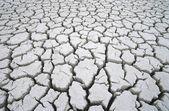 Cracked dry earth — Stock Photo