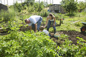 Family with boy gardening — Stock Photo