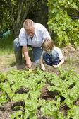 Boy gardening with grandfather — Stock Photo