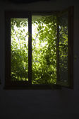 Shrubbery behind window — Stock Photo