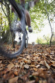 Dog chasing person on bike — Stock Photo