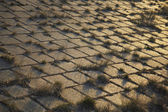 Grass through cobblestones — Stock Photo