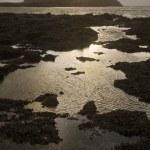 Rocky seashore — Stock Photo #33892499