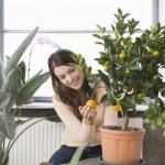 Woman tending potted orange tree — Stock Photo #33894491