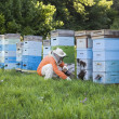Beekeeper Tending Beehives — Stock Photo #33894921