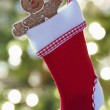 Gingerbread man in Christmas stocking — Stock Photo