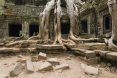 Temple with Tree Roots — Stock Photo