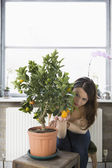 Woman tending potted orange tree — Stock Photo