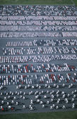Cars and trucks parked — Stock Photo