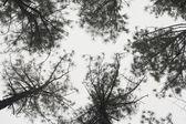 Tress against sky — Stock Photo