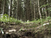 Forest undergrowth — Stock Photo