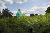 Woman Standing Among Ferns — Stock Photo