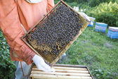 Beekeeper Holding Honeycomb — Stock Photo