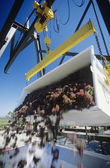 Wine grapes unloading into crusher, — Stock Photo