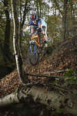 Mountain biker in woodland — Stok fotoğraf