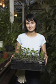 Greenhouse Worker with Tray of Potted Plants — Stock Photo