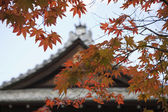 Temple roof with Japanese maple tree — Stock Photo