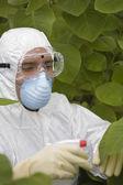 Worker spraying plants — Stock Photo
