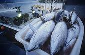 Tonno in contenitore su barca da pesca — Foto Stock