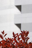 Red Leaves by Skyscraper — Stock Photo