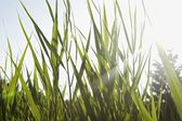 Grass in field — Stockfoto