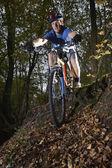 Mountain biker in woodland — Stock Photo