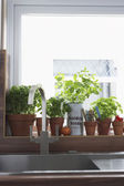 Herbs growing in flowerpots — Stock Photo