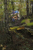 Mountain biker in woodland — Photo