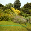 Stock Photo: Hose in garden