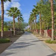 Road with palm trees — Stock Photo