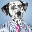 Dalmatian Businessman — Stock Photo