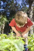 2 Year old bends forward to examine undergrowth in vegetable garden — Stock Photo