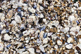 Seashells on seashore — Stock Photo