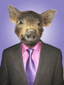 Piglet dressed business man — Stockfoto