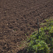 Ploughed agricultural field — Stock Photo #33991367