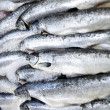Freshly caught fishes — Stock Photo