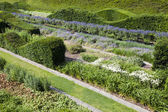 Rows of beautifully designed hedges — Stock Photo