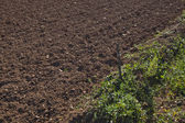 Ploughed agricultural field — Stock Photo