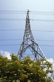 木の上の電気のパイロン — ストック写真