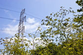 Electricity Pylon above trees — Stock Photo