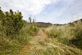 Path mown through long grass — Stock Photo