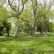 Stock Photo: View across shady grass into park