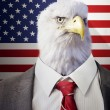 Eagle head businessman — Stock Photo